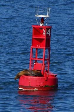 Buoy_seal